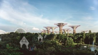 singapore supertrees are some of the top things to see in singapore